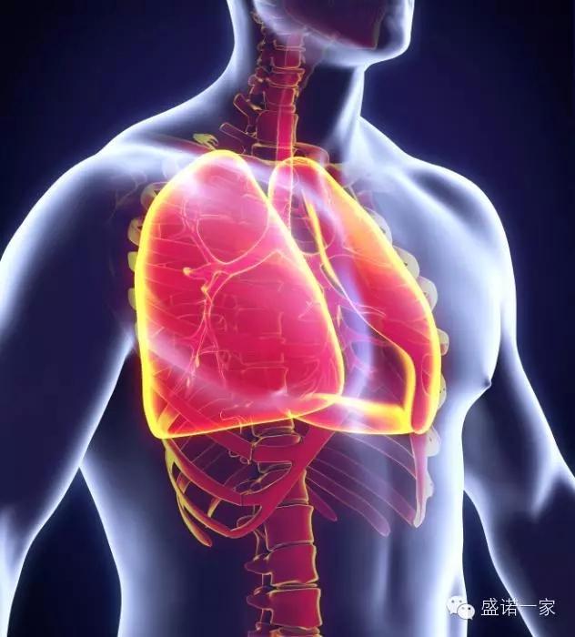 肺就像一对风箱:当它们膨胀时,空气会被吸入;当它们压缩时,二氧化碳废气会被排出。血液流经身体其他部位后,其中的氧气已经消耗殆尽。这些血液会通过心脏,流入肺泡上的毛细血管内。此时,肺泡内的氧气就会穿过薄膜进入血液,而血液中累积的二氧化碳则会进入肺泡,并通过呼吸重新进入大气层。这样,气体交换就完成啦! 5、如果没有肺表面活性物质,整个肺就会萎缩!