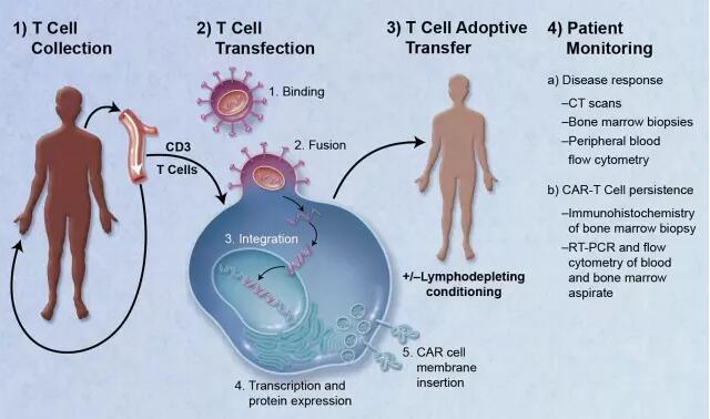 癌症免疫疗法大盘点3.jpg