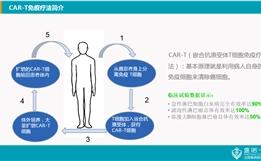 CAR-T免疫疗法