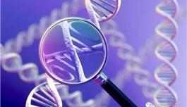海外医疗 通过基因评分,18岁时就能发现痴呆的风险?