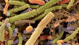 海外医疗 Science:为什么膳食纤维可以让我们更健康?答案在肠道微生物……