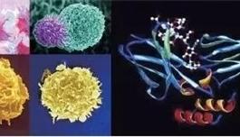 海外医疗 美国MD安德森癌症中心:免疫疗法或使晚期癌症患者长期存活,甚至临床治愈!