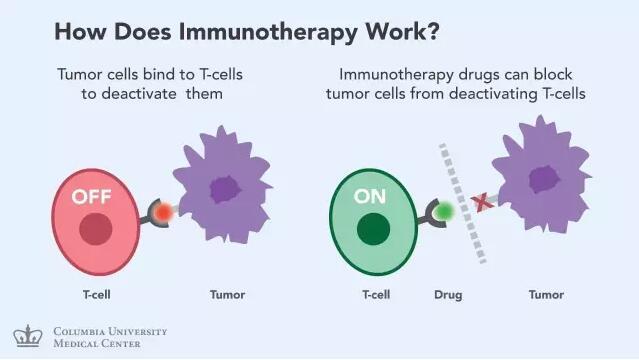 癌症免疫疗法大盘点2.jpg