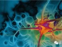 出国看病 研究发现正常细胞癌变的新机