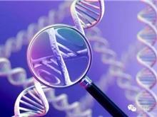 海外医疗 通过基因评分,18岁时就能发