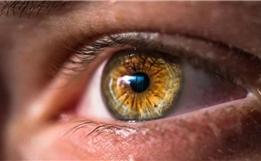 哈佛医生开发出CALEC技术:用患者自身干细胞重建受损眼角膜