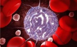 一文读懂:干细胞移植是怎么回事?