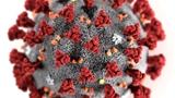 从研发出新冠病毒抗体,到临床应用还有多远?