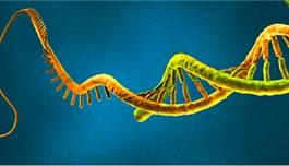 JCI:miR-31或将成为肺癌治疗新靶标