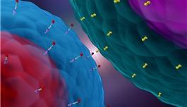80%完全缓解,CAR-T在B细胞急性淋巴细胞白血病临床试验中成绩喜人